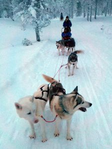 Malorie_Mackey_Nude_Husky_Sledding_Kakslauttanen_Arctic_Resort